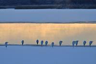 凍るウトナイ湖 - やぁやぁ。