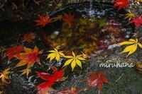 本土寺へ*手水鉢の後ろには・・。 - MIRU'S PHOTO