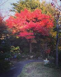 一気に秋から冬へ - 水鏡 mizukagami