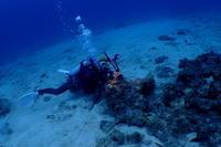 18.12.10雨なんか、へっちゃら!! - 沖縄本島 島んちゅガイドの『ダイビング日誌』