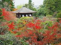 秋に囲まれる - 風の香に誘われて 風景のふぉと缶