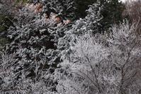 霧氷の大川嶺 - 軟弱足 の山歩き