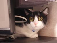 猫のお留守番 ジェスちゃん編。 - ゆきねこ猫家族