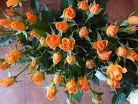 急に真冬が。。。 - フラワーショップデリカの花日記