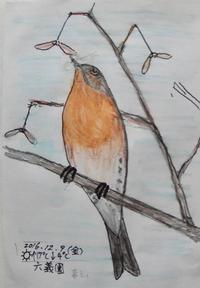 #野鳥スケッチ #ネイチャー・ジャーナル 『花鶏』 - スケッチ感察ノート (Nature journal)