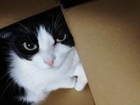 元気です。 - 黒白猫うーこの自宅日記。