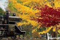 門デフと銀杏と紅葉と・・・~大井川鐡道~ - 蒸気をおいかけて・・・少年のように