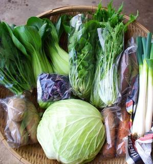 【最終回】今週の野菜セット(12/11~12/15着) - キシノウエンの 今日のてしごと