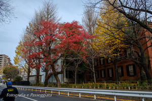 18散歩?東京・冬 - 散歩と写真 Fotografia e Passeggiata