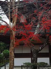 観音殿と紅葉 - 風の香に誘われて 風景のふぉと缶