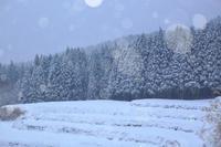 冬到来 - 彩
