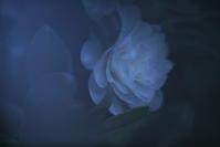 a flower -     ~風に乗って~    Present