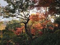 晩秋の旧安田庭園にて - はーとらんど写真感