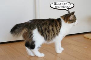 今日の保護猫さん達 - 保護猫さんのご縁探し