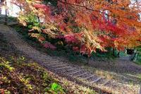 木漏れ日で光る楓の葉 - ぶらり散歩 ~四季折々フォト日記~