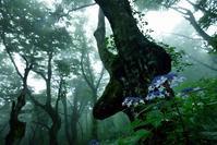 あじさい色の初夏 - 源爺の写真館