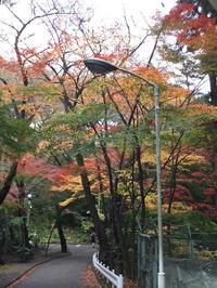 紅葉狩り散歩~ - おはけねこ