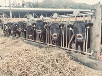 牛と野崎と初雪と - よつばの出張写真屋~yotsubanoie~