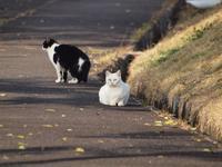 『中池公園の猫達』 - 自然風の自然風だより