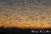 夕日も綺麗♪塒入りを待っていたら・・すごい数の鳥達が!!! - ケンケン&ミントの鳥撮りLifeⅡ
