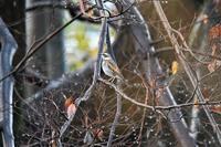 雨の河川敷で・・・ - 鳥と共に日々是好日