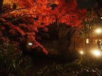 祇園白川のライトアップ紅葉♪ - アリスのトリップ