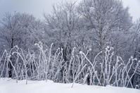 寒いけど雪は少ない - inside out