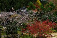 京の紅葉2018紅葉と桜と(大原・実光院) - 花景色-K.W.C. PhotoBlog