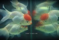 かわいいかわいいリップちゃん と、^^ - FUNKY'S BLUE SKY