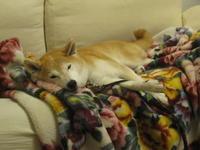 犬休息中 - オーク、熟成中