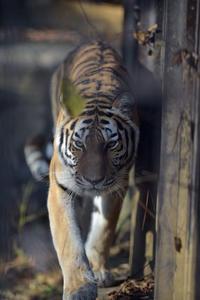 正面から向かい合う - 動物園へ行こう
