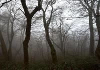 霧中の苅尾 - 源爺の写真館