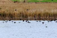 湿原にて - 銀狐の鳥見