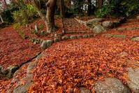 晩秋の敷き紅葉 - toshi の ならはまほろば