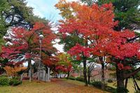 村松公園2 - くろちゃんの写真
