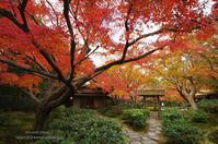 もみじのあるお庭 - It's only photo 2