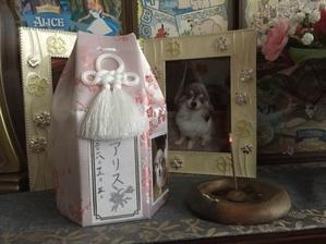 12月12日 - のんびり・・まったり・・犬と猫の生活
