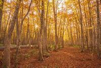 東北の紅葉②紅葉の蔦沼 - エーデルワイスPhoto