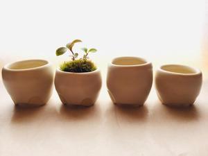 豆盆栽鉢 - soh-souの手仕事