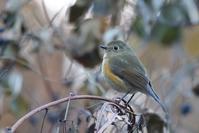 山と池(2018年12月13日) - ほとんど野鳥写真日記