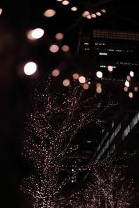 ライトロマンチックが止まらない - 花は桜木、