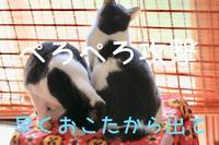 にゃんこ劇場「ぺろぺろ攻撃part2」 - ゆきなそう  猫とガーデニングの日記