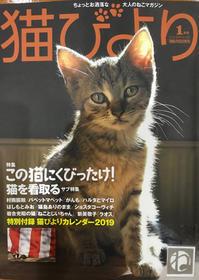 猫びより 2019年1月号 - 猫の目かわら版