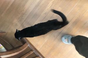 お知らせ - 八幡地域猫を考える会