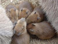5頭の赤ちゃんズ - 動物園へ行こう