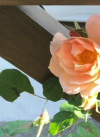 ピンク色は幸福感いっぱい♡ - 小さな庭 2