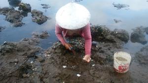 泥に生きる小さな牡蠣 - あけっぴろげてあらいざらいのあるがまま