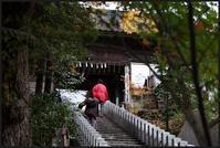 大鷲神社-6 - Camellia-shige Gallery 2