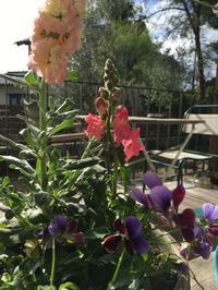 冬の庭こそ明るい色を〜かわいくて高性能❤️なテラコッタのお家の撮影会 - カフェスタイルの家づくり~Asako's WORK & LIFE