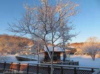 新雪の朝 - Photo Album